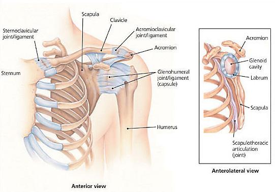 Shoulder Rehab Exercises Shoulder Rehabilitation Indianapolis